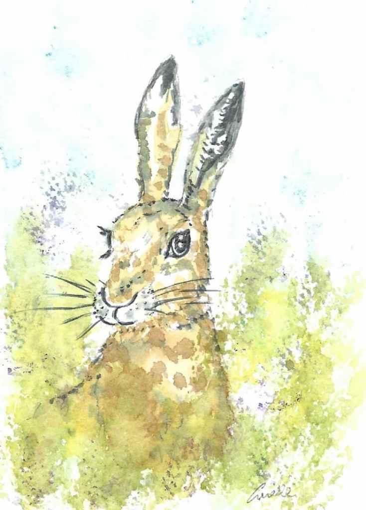 Hare watercolour Hare watercolour, light