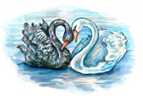 Black Swan And White Swan Two Swans Love Watercolor Illustration
