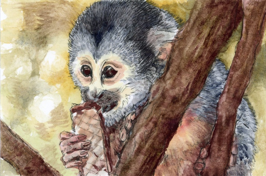 #DoodlewashSeptember2021 Prompt: Cookie. Did you know that only New World (Americas) monkeys have pr