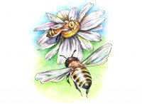 Two Bees And Daisy Flower Watercolor Illustration Painting