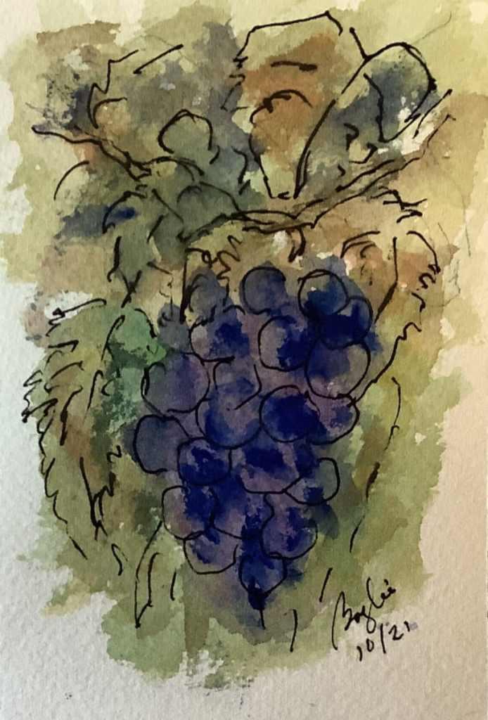 #doodlewashoctober2021 day 23 grapevine IMG_3600