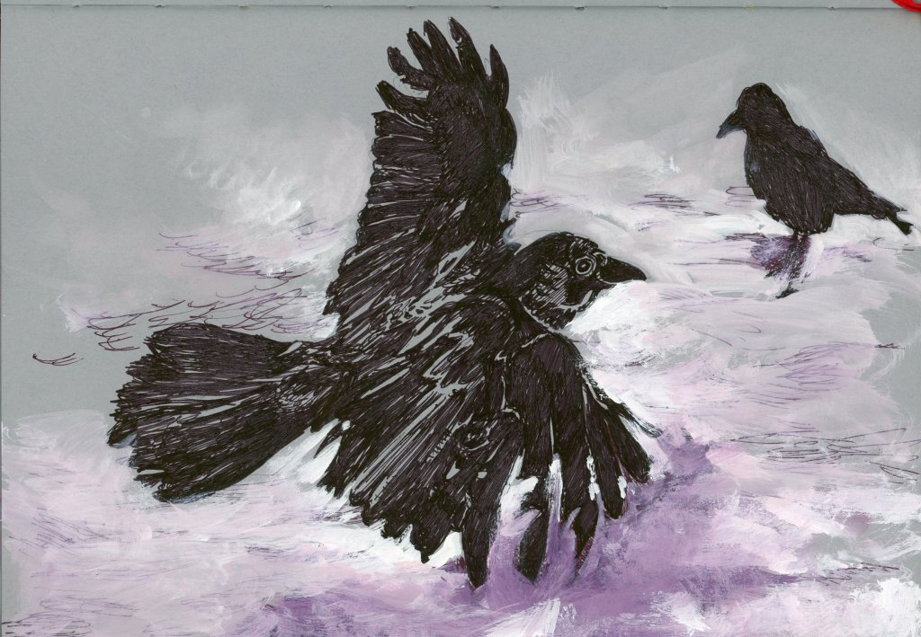 * #DoodlewashOctober2021: Bird. * #Inktober2021 prompt: Raven. Did you know that besides having over