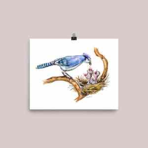 blue jay feeding baby birds watercolor print