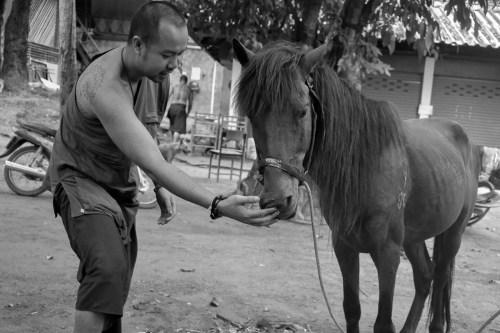 Cavallo d'oro | ©Carmine Rubicco, 2018