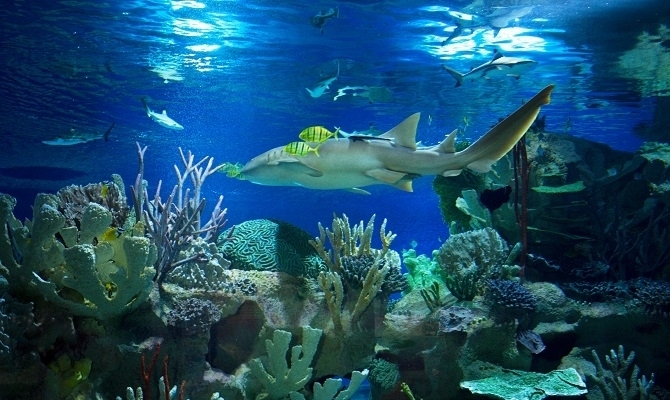 Planet Neptune Oceanarium - Sharks