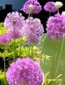 Doon Art purple flora blur 2