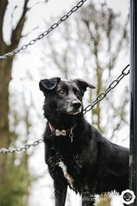 blak dog in marbury park