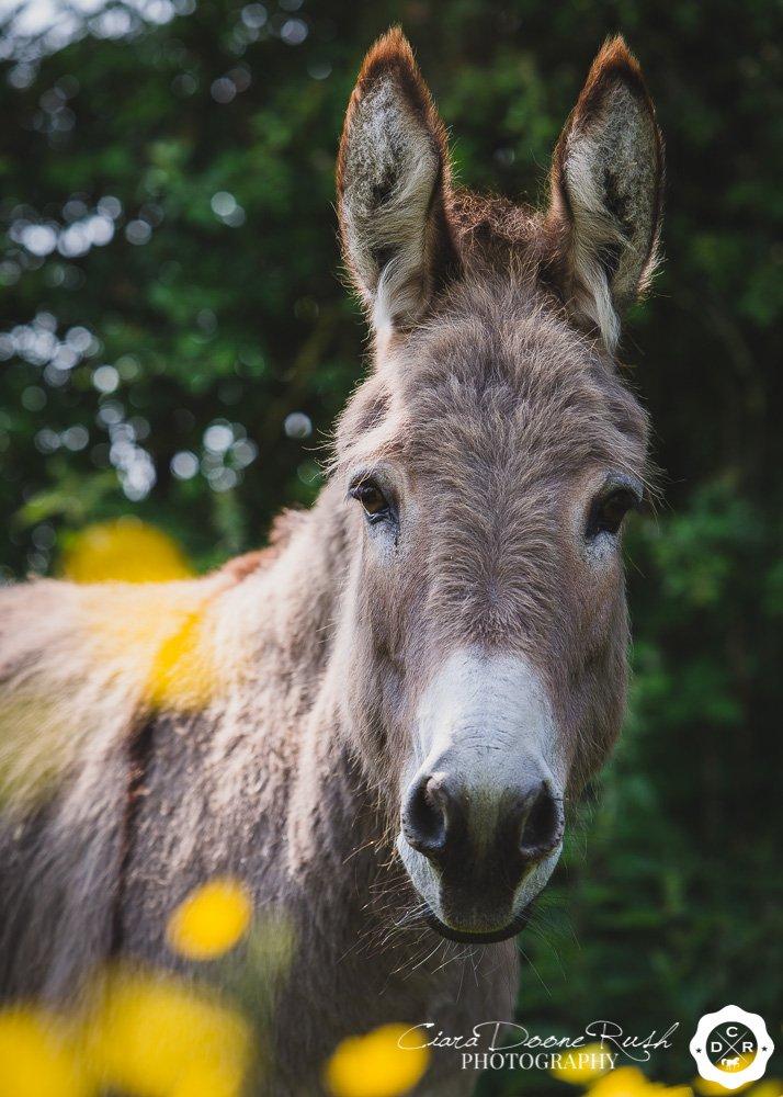 Donkey At Liberty Photo Shoot