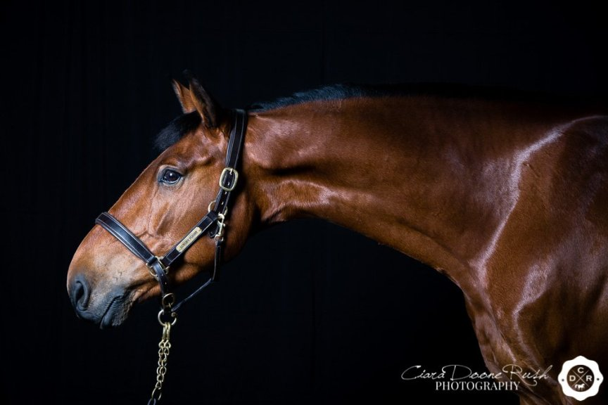 Horse Studio Photo Shoot