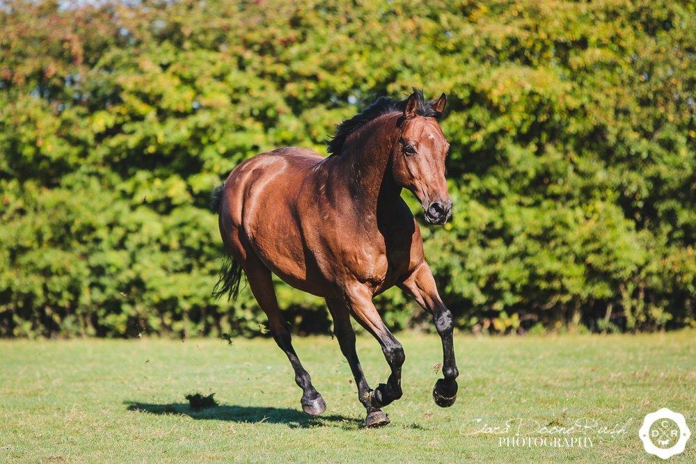 a horse cantering