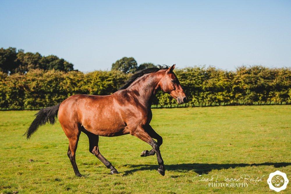 a horse photo shoot merseyside