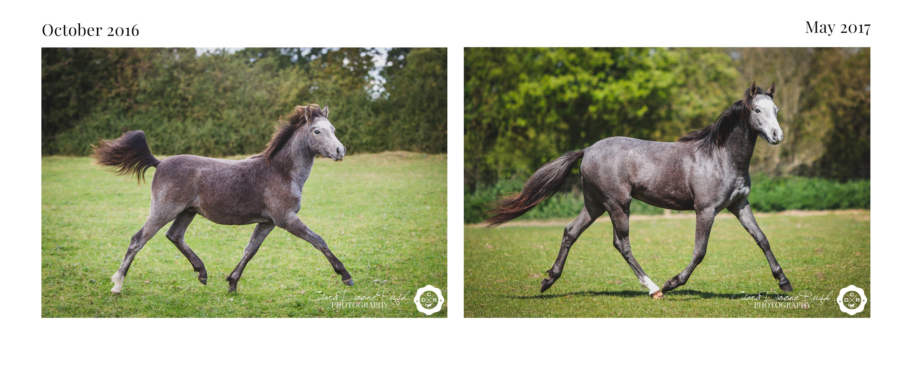 a foals mini shoot series 6 months old and 1 year old