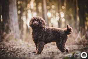 a dog photo shoot in Delamere Forest