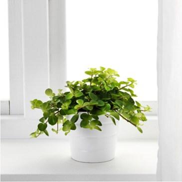 himalayamix-potted-plant__0443867_PE594590_S4