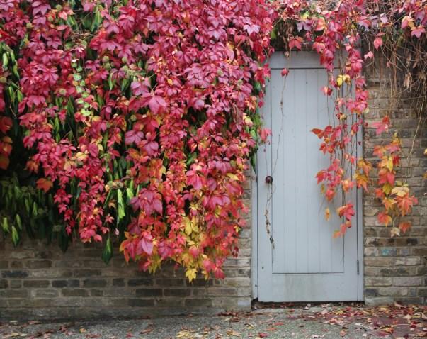 161104-autumnincamberwell2
