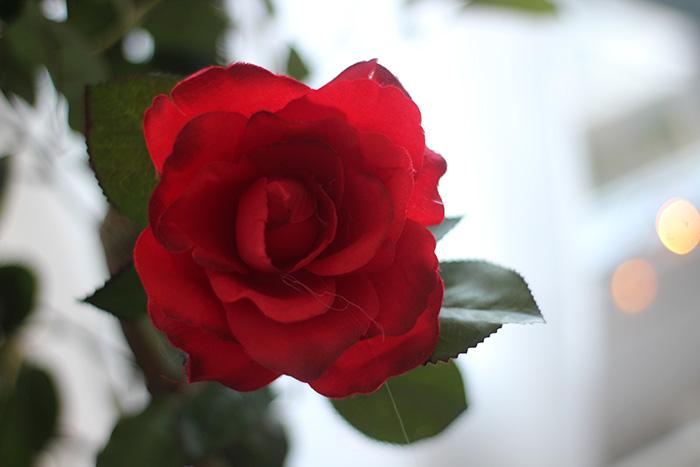 action stationary shoplog rode nep rozen