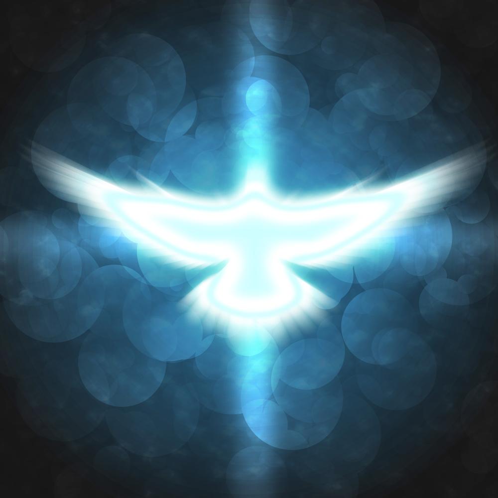 In Creation We Trust Flight in Spirit