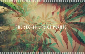 The Secret Life Of Plants: Music And Cannabis Cultivation