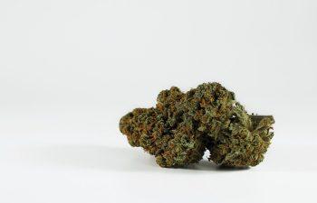 Review: Purple Haze 3
