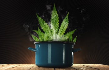 Growing Cannabis For Food?: Think Organically