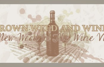Homegrown Weed And Wine Tours: A New Weed In The Wine Vine 4