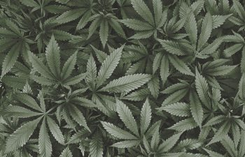 Enlightened Health: Professional Cannabis Experts Pushing the R&D Envelope 1