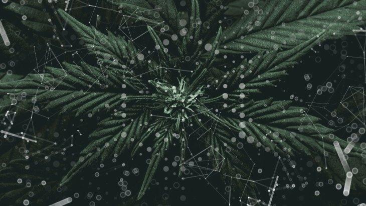 Plant Propagation 1
