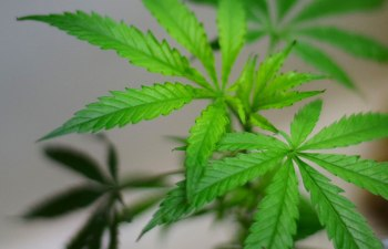 """L'EAGLE SERVICES: Denver's First """"Certifiably Green"""" Cannabis Retail Dispensary 1"""