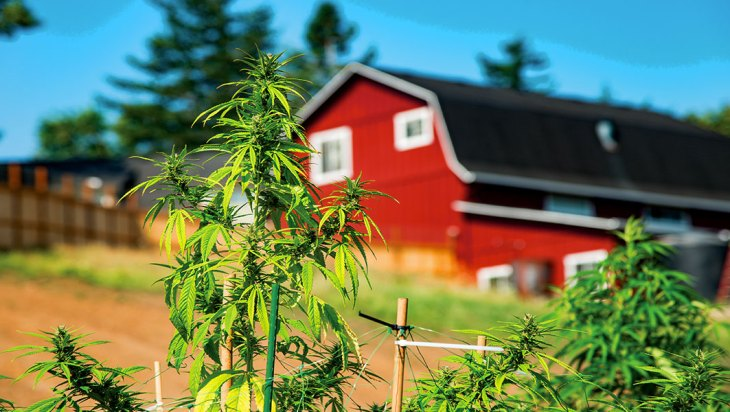 East Wind Cannabis