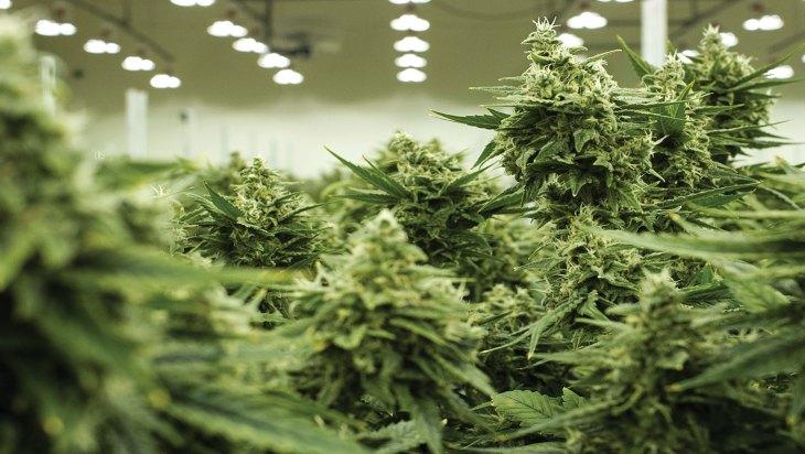 Flora Vega Cannabis - Las Vegas, NV