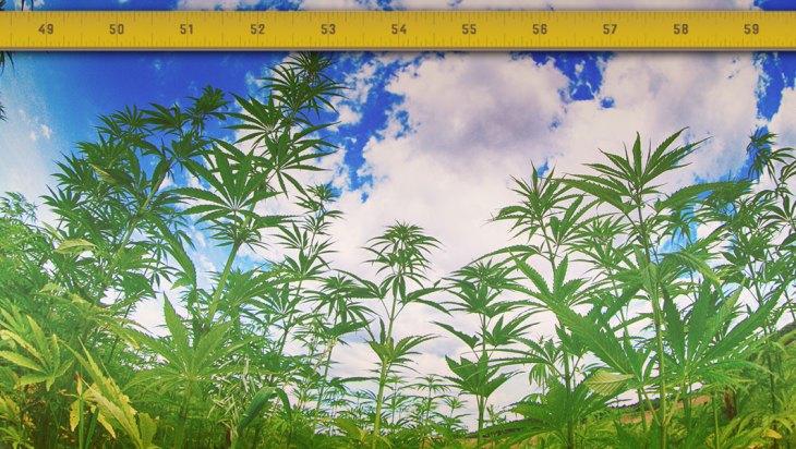 Washington State Canopy Limits