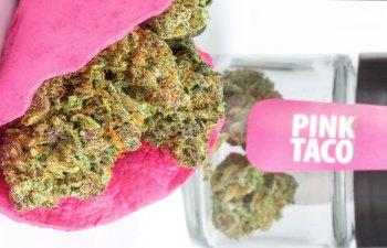 Pink Taco by GLW