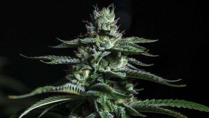 Just Herb - North Tahoe, CA