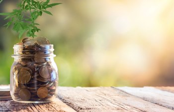 Thinking of Investing in the Legal Cannabis Market? Read This.