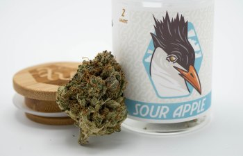 Sour Apple Strain by High Tide Cannabis Company