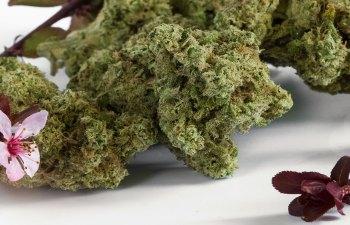 Cherry AK-47 by State Flower Cannabis
