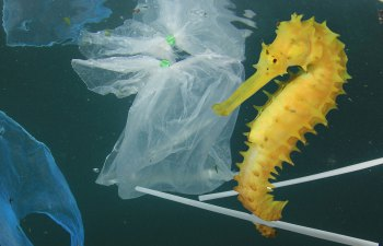 When It Comes to Microplastics, Size Matters!