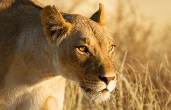 7 Female Animals Ruling the Wild