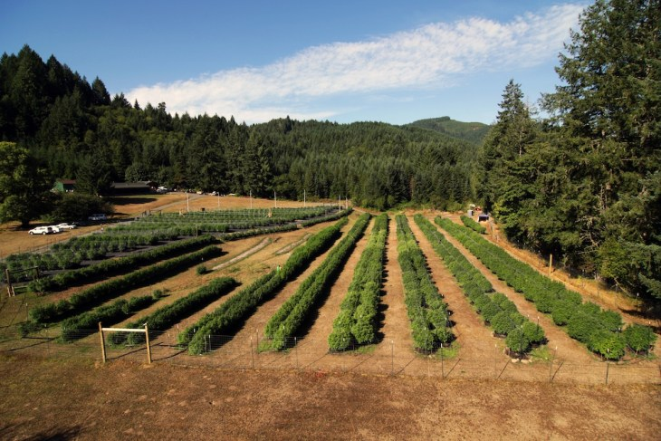 Winberry Farms - Wilamette Valley, OR