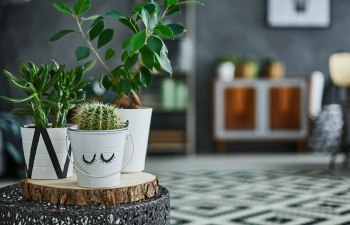 Four Things to Consider Before Buying a Mood-Enhancing Houseplant