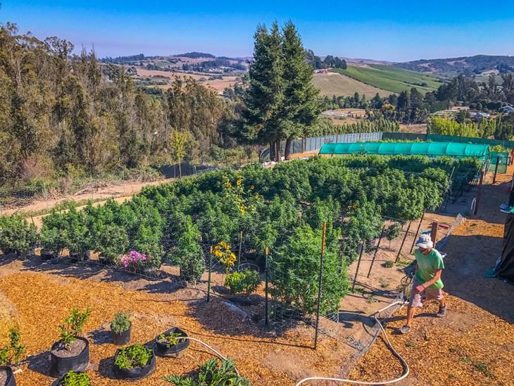 Fiddler's Greens Sonoma County