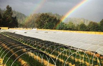 Decibel Farms - Southern Oregon