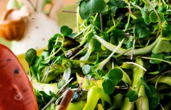 Asparagus and Microgreens Salad by Laurie + MaryJane
