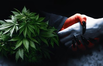 Legal Cannabis Markets Promised Legitimacy, but the Illicit Market Thrives On