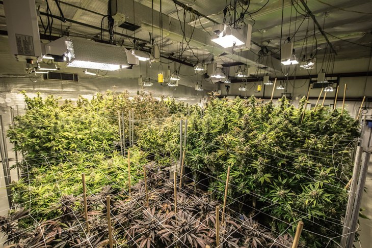 Vision Quest Cannabis - Salida, CO