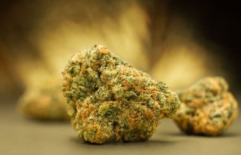 Acapulco Gold by Motherherb
