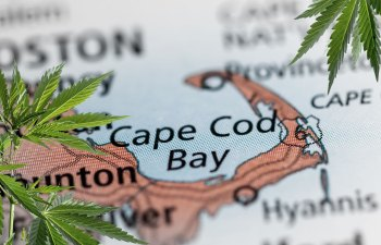 Cannabis on Cape Cod: A Fledgling Industry