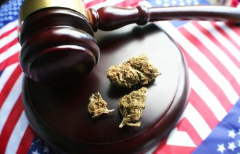 The Various Roles Of Cannabis Czars Across The United States