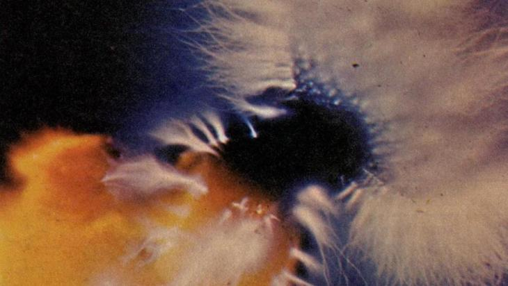 Flashback Friday: Kirlian Photography