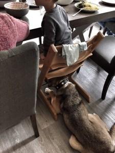 Hund unter Hochstuhl beim Großfamilienurlaub